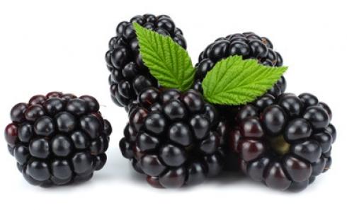 Ежевика: полезная  ягода на садовом участке